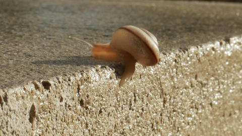 1929 Snail Crawling on Ledge with Palm Trees, HD Footage