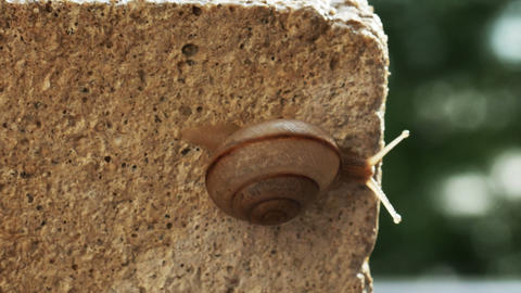 1934 Snail Crawling on Ledge with Palm Trees, HD Footage