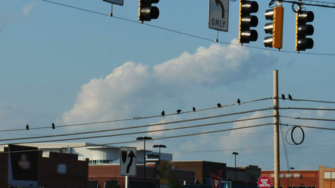 1956 Crows on Power lines, 4K Stock Video Footage
