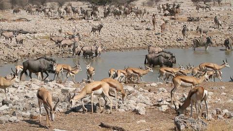 Etosha waterhole Footage