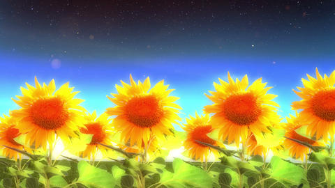 1964 Into Heaven with Sunflowers Glowing, HD Stock Video Footage