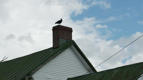1974 Old Farm House with Turkey Vulture, 4K Stock Video Footage