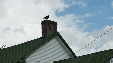 1974 Old Farm House With Turkey Vulture, 4K stock footage