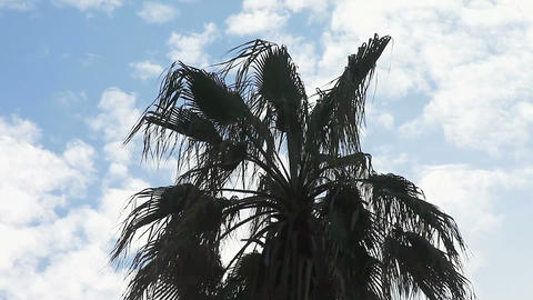 Palm And Clouds stock footage