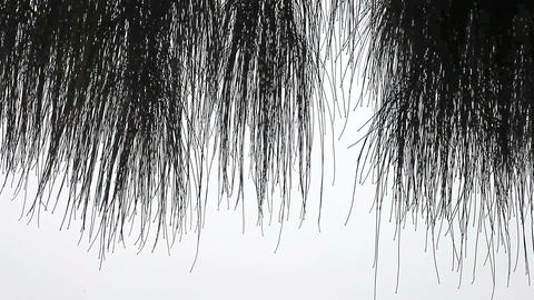 bare willow branches Footage