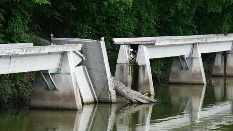 2008 Bridge Damaged by Tree at a Lake, HD Footage