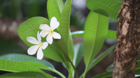 white flower with green leaves Footage