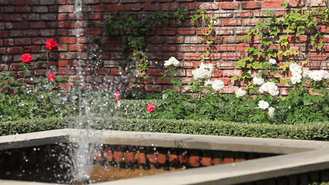rose garden with a fountain Footage