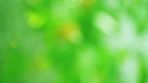 green abstract background Footage