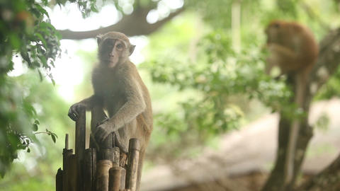 monkey sitting on a branch Footage