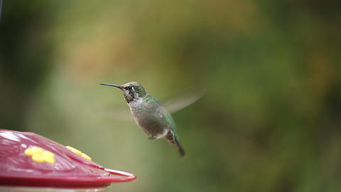 hummingbird pauses Live Action