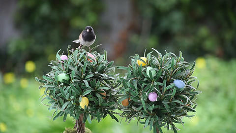bird on Easter egg tree Stock Video Footage