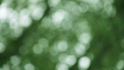 green defocused leaves background Stock Video Footage
