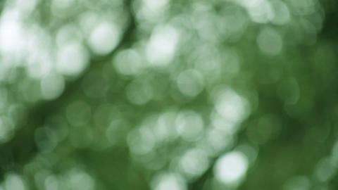 green defocused leaves background Footage
