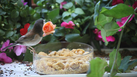 two birds at a feeder with flowers Footage