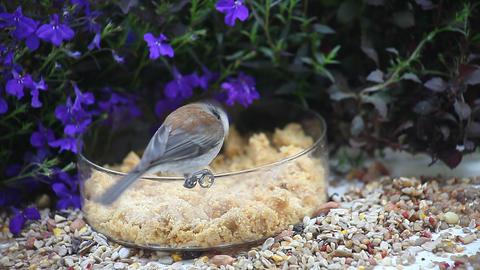 chickadee with blue flowers Footage