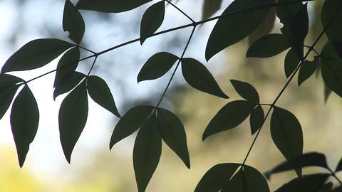 graceful leaves Footage