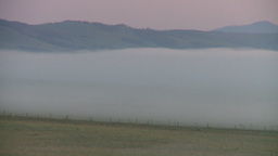 HD2008-7-1-2 sunrise fog cows Stock Video Footage