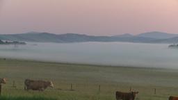 HD2008-7-1-2 sunrise fog cows Stock Video Footage