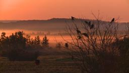 HD2008-7-1-10 sunrise fog birds Stock Video Footage