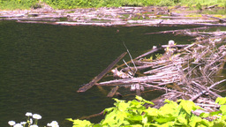 HD2008-7-1-20 lake dead logs floa Stock Video Footage