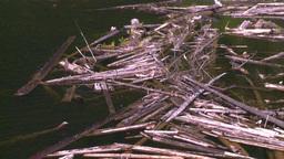 HD2008-7-1-22 lake dead logs float Stock Video Footage