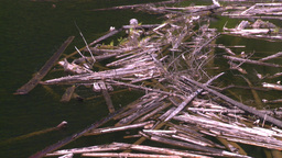HD2008-7-1-22 lake dead logs float Stock Video Footage