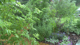 HD2008-7-2-10 rain falling in green garden Stock Video Footage