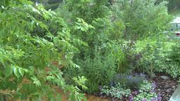 HD2008-7-2-10 rain falling in green garden Stock Video Footage