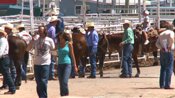 HD2008-7-3-8 cowboys rodeo infield Stock Video Footage