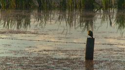HD2008-7-7-4 pond bird evening Stock Video Footage