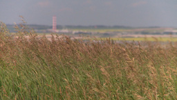 HD2008-7-10-7 wild grass blowing in wind rack out and in Stock Video Footage