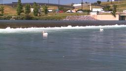 HD2008-7-14-20 weir pelicans Footage
