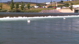 HD2008-7-14-20 weir pelicans Stock Video Footage