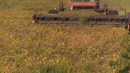 HD2008-7-14-53 tractor harvesting timothy hay Stock Video Footage