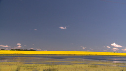 HD2008-7-15-40 canola fields Stock Video Footage
