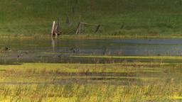 HD2008-7-15-42 prairie marsh Stock Video Footage