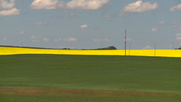 HD2008-7-15-52 canola fields wheat Stock Video Footage