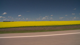 HD2008-7-15-54 canola fields drive Footage