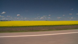 HD2008-7-15-54 canola fields drive Stock Video Footage