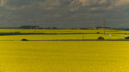 HD2008-7-15-58 canola fields Footage