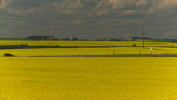 HD2008-7-15-58 canola fields Stock Video Footage