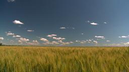 HD2008-7-15-72 wheat Stock Video Footage