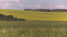 HD2008-7-16-4 canola wheat Stock Video Footage