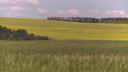 HD2008-7-16-4 canola wheat Stock Video Footage
