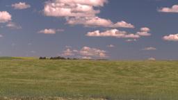HD2008-7-16-12 wavy barley Footage