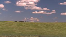 HD2008-7-16-12 wavy barley Stock Video Footage