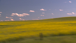 HD2008-7-16-18 canola drive Stock Video Footage