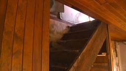 HD2008-7-16-50 interior abandoned farm house Stock Video Footage