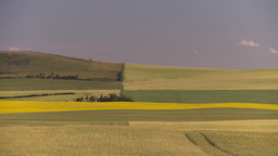 HD2008-7-16-58 canola wheat fields patterns Footage